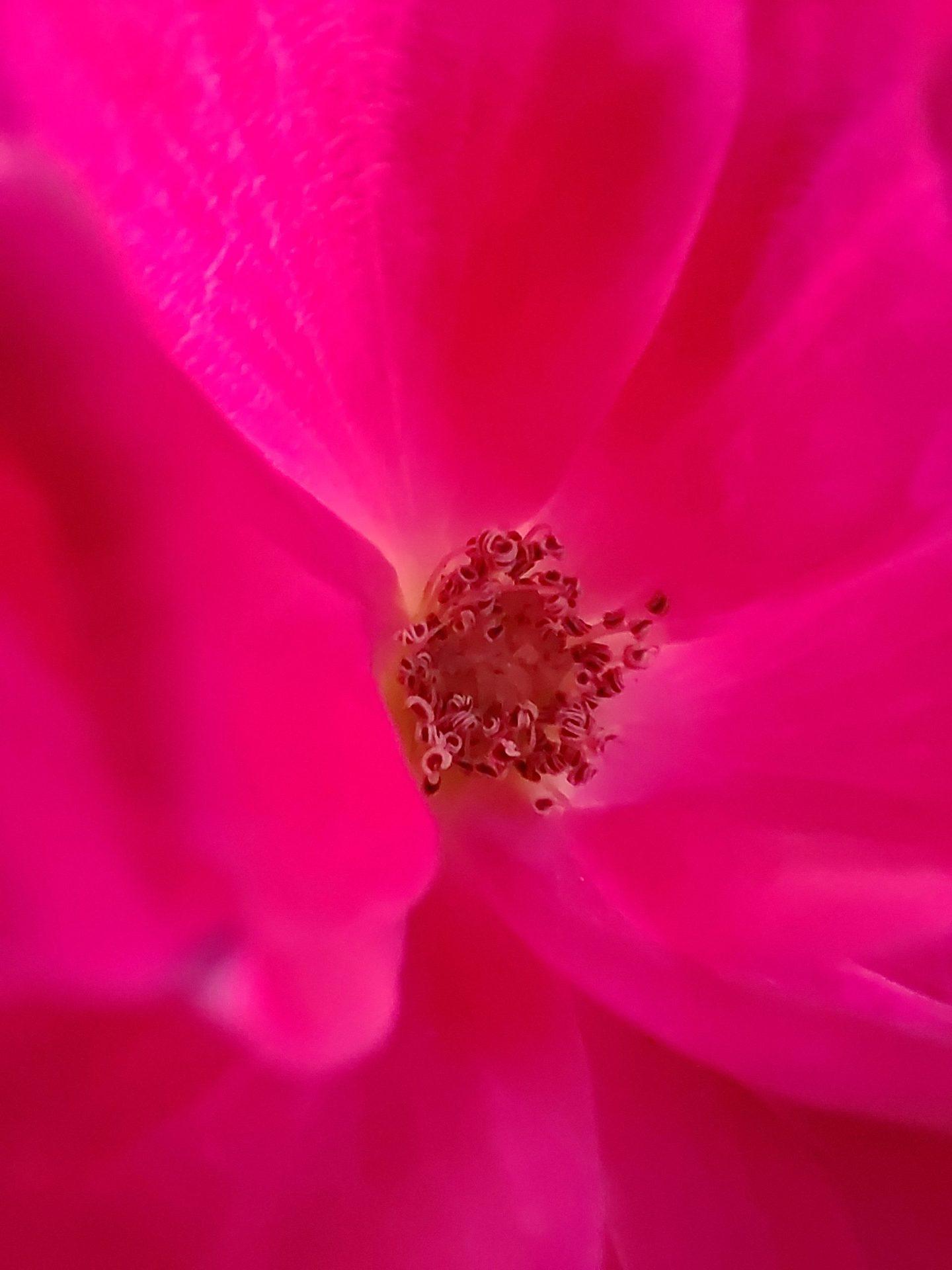 Ảnh macro chụp hoa trên ZTE Axon 30