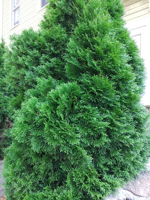 Ảnh chụp cây xanh từ Kyocera Duraforce Ultra