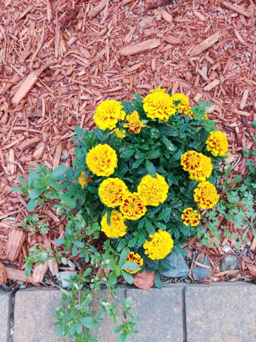 Những bông hoa màu vàng và xanh trong vườn được chụp từ Kyocera Duraforce Ultra