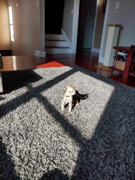Chú mèo con trong nhà trên tấm thảm từ Kyocera Duraforce Ultra