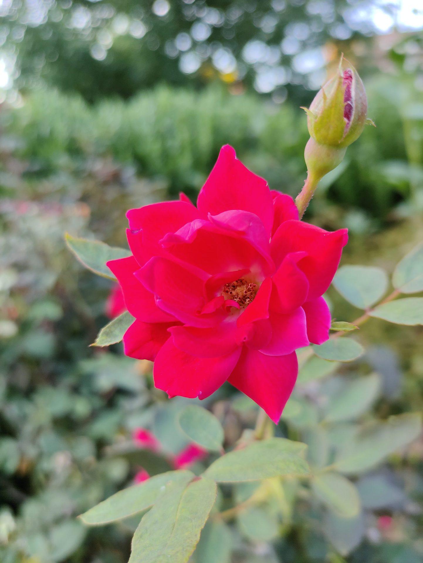 Hình ảnh chụp hoa trên ZTE Axon 30